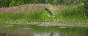 rotate-05-heron-on-millhaven